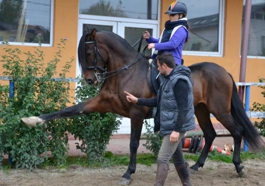 Curs echitatie - deburajul calului tanar (initiere) MODULUL 1